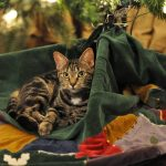 What A Stray Cat Taught Me About Self-Care