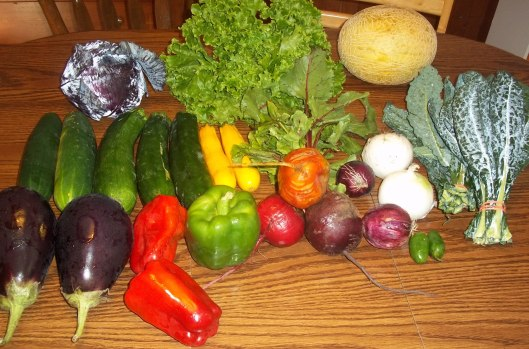 Our CSA Basket for the Week