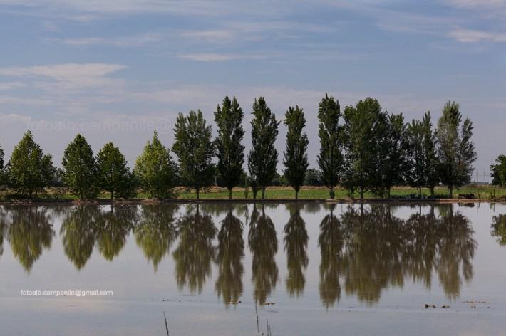 Rice field, Sanguinetto, Verona province, Veneto, Veneto Region, Italy