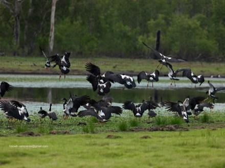 Australia dei Parchi Naturali, l'Eden in un clic