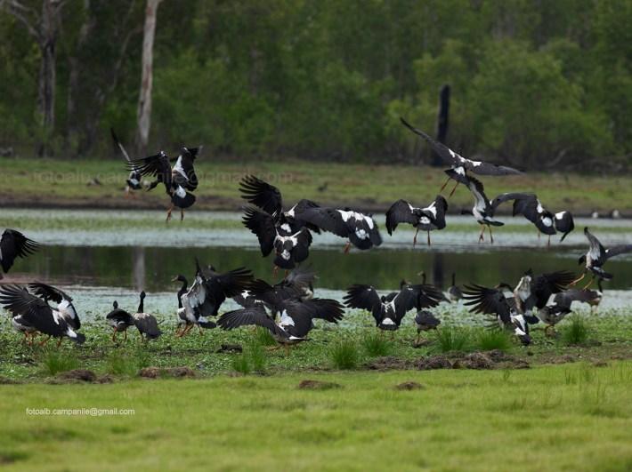 Northern Territory 412 Kakadu National Park, Anbangbang Billabong 0000
