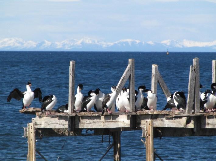 cormoranes-credits-foto-marie-louise-roux