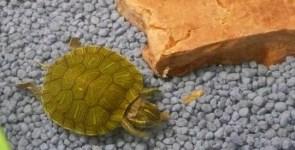 Tartarughe, piccoli animali domestici
