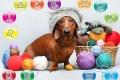 oroscopo animali domestici del tuo cane - oroscopo animali domestici