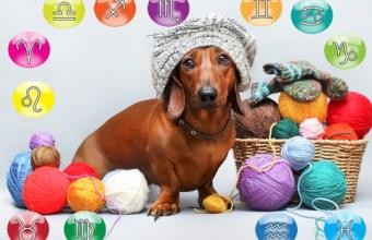 Oroscopo Animali Domestici Agosto per il tuo cane