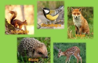 Favole per bambini, animali del bosco