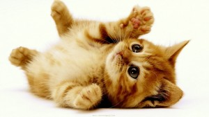 moneymagpie_Make money from pet sitting and pet boarding_kitten