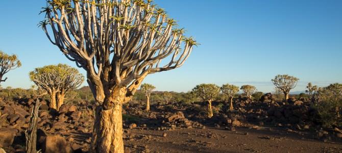 Namibia – eine Premiere dieses Jahr
