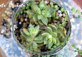 como-fazer-um-terrario-com-suculentas15