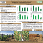 Evalution of NZone Max in Corn (University of Idaho, Parma Research & Extension Center)