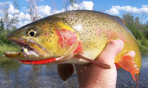 Montana Fishing gets a boost in June