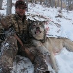 Wolf Killed Near Augusta, MT.
