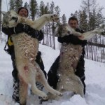 Wolf Hunting Season Comes To A Close: Updated With WMU Information