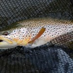 Good Spring Fishing in the Butte and Bozeman Outdoor Report