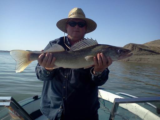 30.25 Inch Walleye From Fort Peck