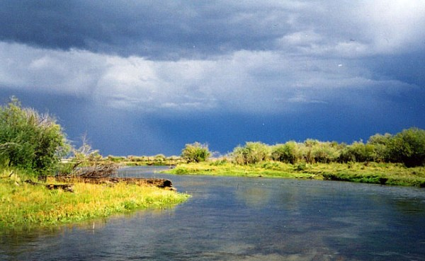 Fish Hitting Crane Flies on The Beaverhead: Montana Fishing Report