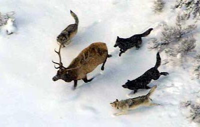 PUBLIC COMMENT SOUGHT ON PROPOSED 2012/2013 WOLF HUNTING SEASON