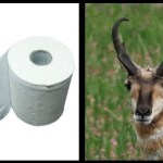 Montana Hunter Lures Antelope with Toilet Paper