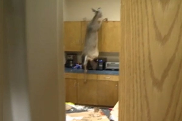 Deer Breaks Through Window and Destroys Break Room