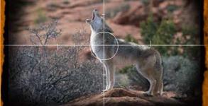 coyote_crosshair2