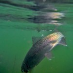 Montana Fly Fishing Report by Scott Anderson of Montana Fishing Company &#8211; 4.26.13