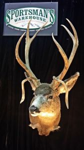 World Record Brow Tines