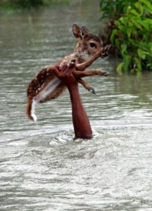 CATERS_BOY_SAVES_BABY_DEER_FROM_DROWNING_01-737x1024