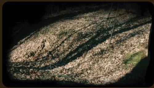 Morel Camo in the Field