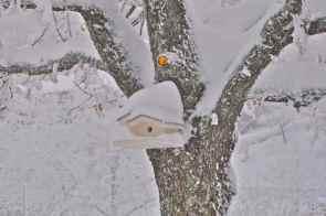 L'arte del nevicare - di Claudio Leoni