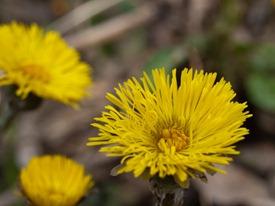 Spring Flowers - 04.02.2010 - 14.15.35