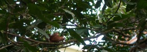 A high nest