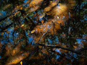 Mangrove - 07.14.2014 - 09.58.48