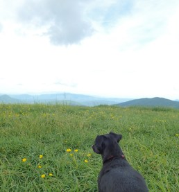 Max Patch Overlook - 05.31.2016 - 11.18.56