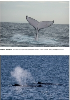 Humpback Whale photo fact cards