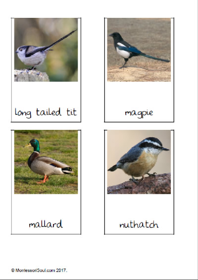 British birds (Three part cards)