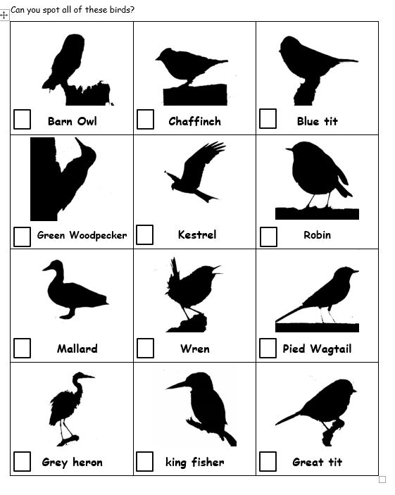 Bird silhouette hunt