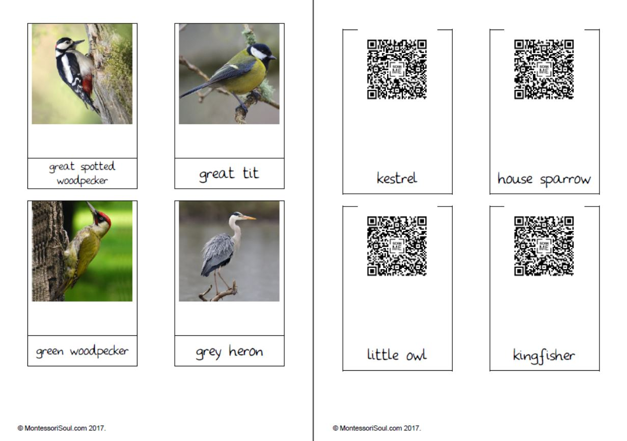 Bird cards with QR Codes - not shortened URL