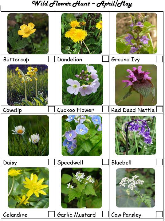 Wild Flower Hunt