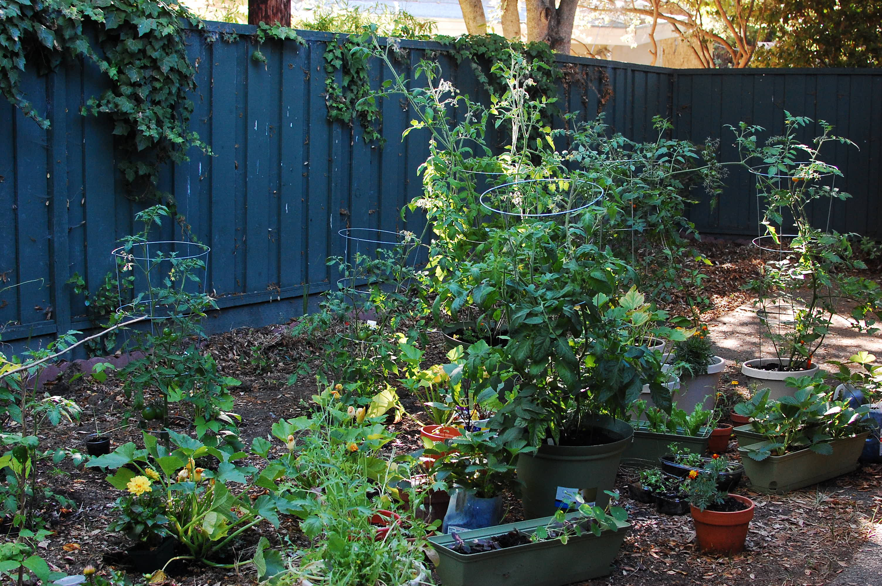 Fullsize Of Backyard Gardening Blog