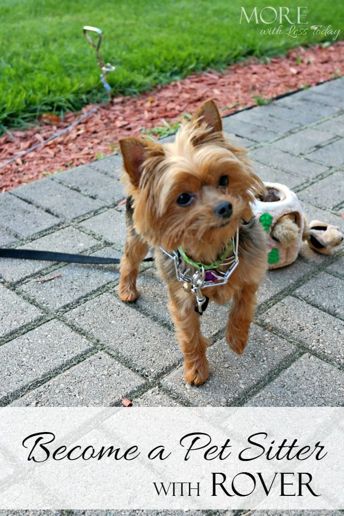 Become a dog sitter with Rover.com, find work as a pet sitter, earn extra money from pet sitting, sign up to be a dog sitter, Rover dog sitting service