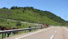 Even the horses want to get on this incredible road