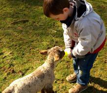 agneau biberon