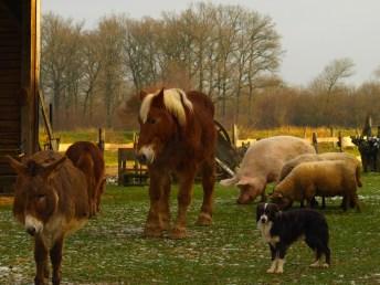 animaux ensemble