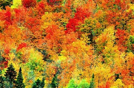 newengland_fallcolors1