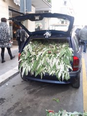 Car full of artichokes - copyright Sara Rosso