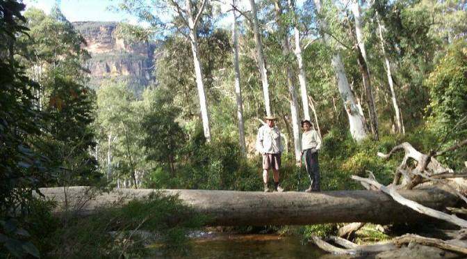 Blackheath: Blue Gum Forest Walk A: & Walk B: