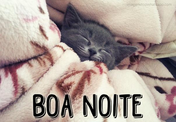 Boa noite - gatinho dormindo - fofo - para whatsapp