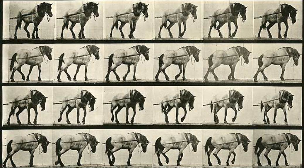 Muybridge-Work-Horse