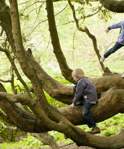 50 Things - climb a tree, credit National Trust Images