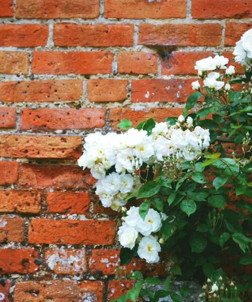 Mottisfont Rose Garden